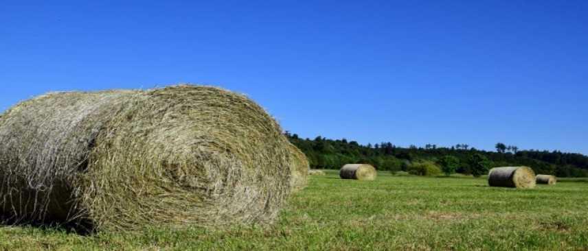 Filippo Gallinella: da governo sostegno per i cerealicoltori