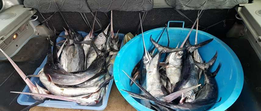 Sicurezza alimentare: blitz a Palermo, sequestri di pesce spada