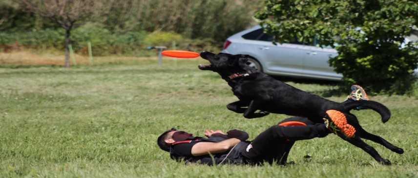 Sport cinofili, il Disc Dog. Intervista all'Istruttore Cinofilo FISC Francesco D'Alessandris