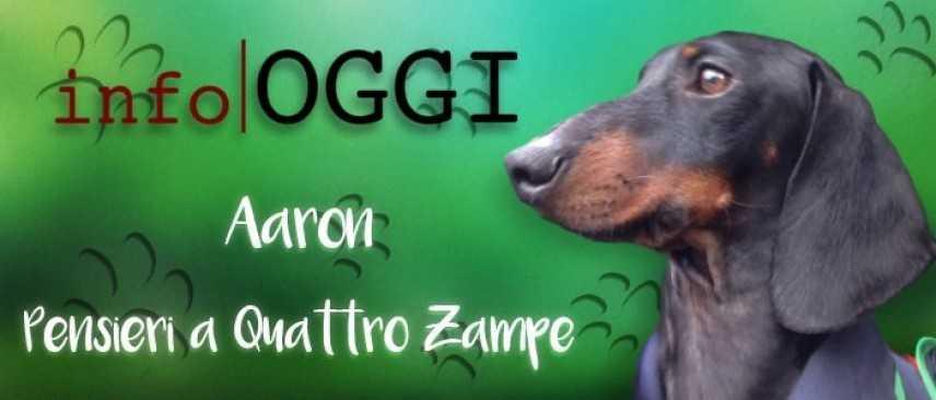 Il leccamento ossessivo-compulsivo del cane