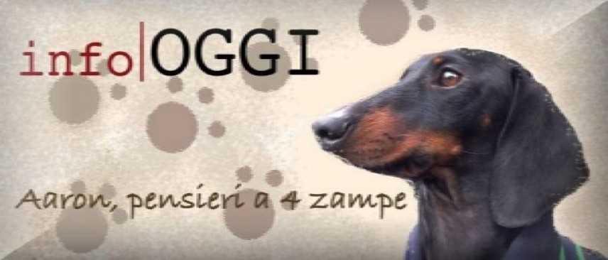 Adottare un cane abbandonato è un grande atto d'amore