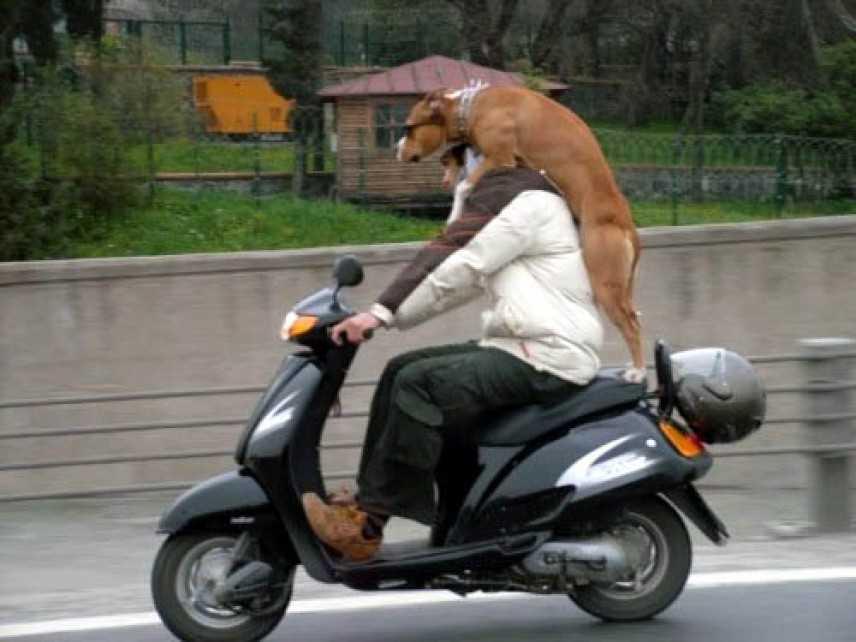"""Quando il passeggero della moto è """"particolare"""""""