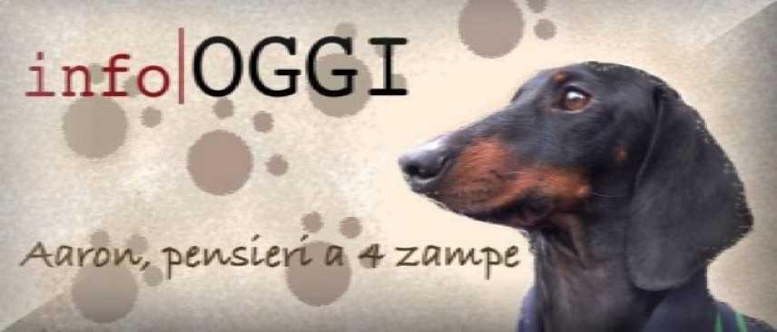Salva la vita di un cane abbandonato: adottalo