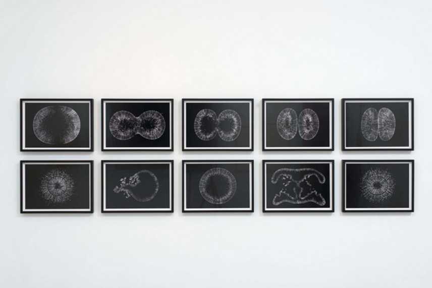 Lens On Life, meraviglie della scienza e dell'arte