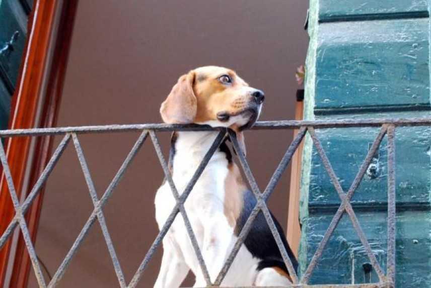 Animali domestici e Condominio, una non facile convivenza