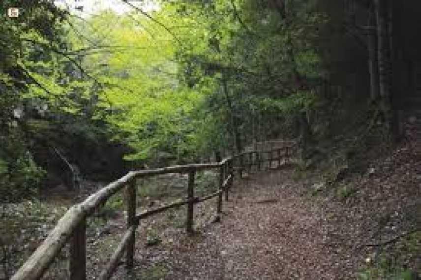 Sardegna, incontro tra Giunta Regionale ed Ente Foreste. Previsti interventi di rinnovamento