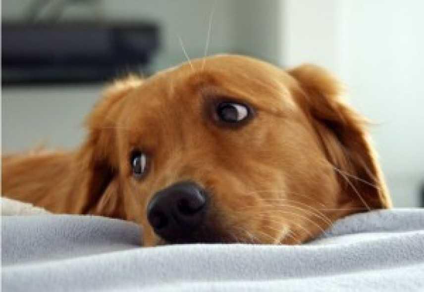 Cani e gatti in ospedale dai propri padroni, l'Emilia Romagna dice sì