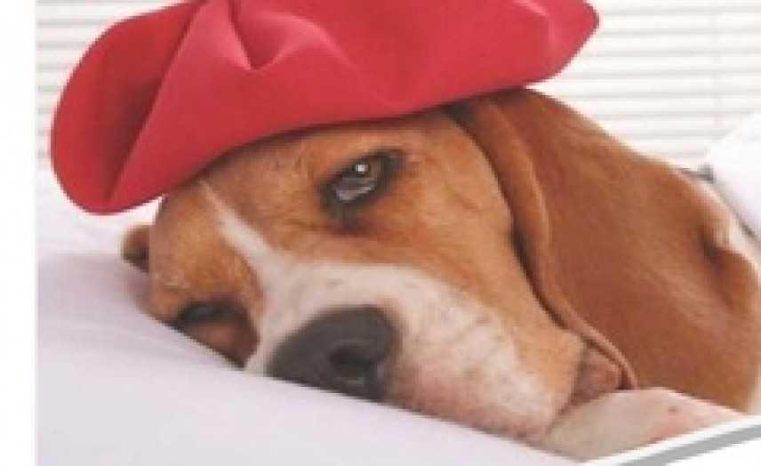 Tarquinia, aperte le iscrizioni al corso di Primo Soccorso per cani