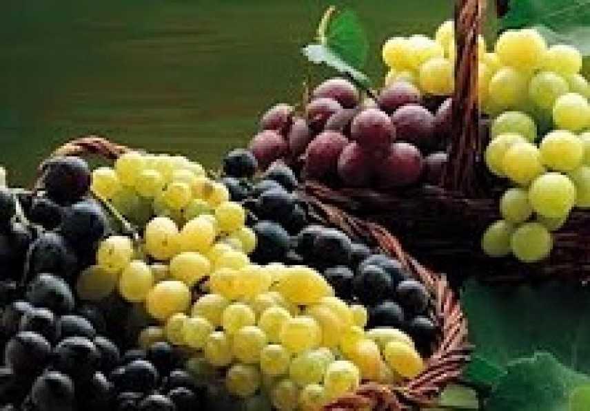 30^ edizione della sagra dell'uva