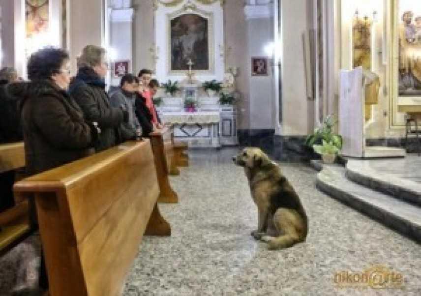 Addio a Ciccio, il cane che aspettava da mesi la padrona dopo la sua morte