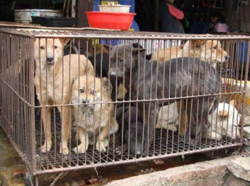 Lager per cani ad Avellino, indagini su combattimenti clandestini