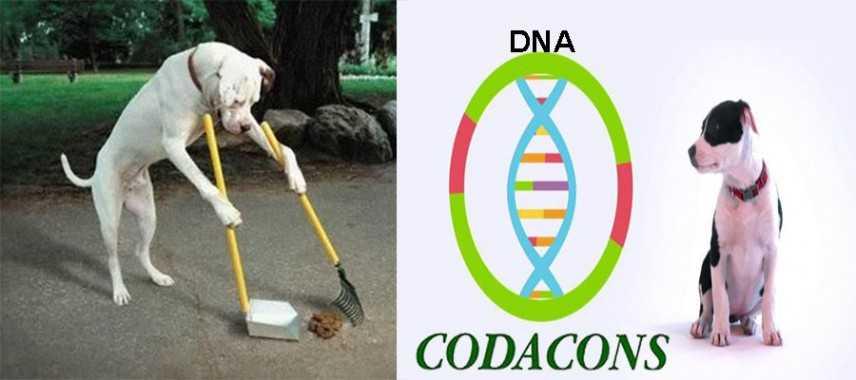 Codacons: banca dati con il DNA dei cani per multare gli incivili