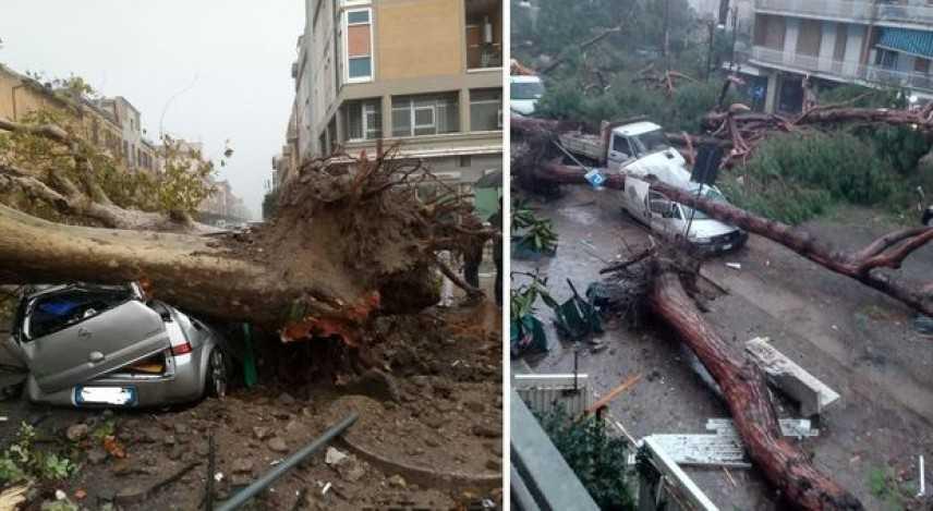 Maltempo: 200 pini secolari caduti a Milano Marittima