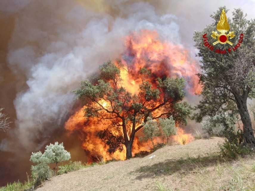 Catanzaro, bruciano le colline della città, sul posto i VVF. Video e Foto