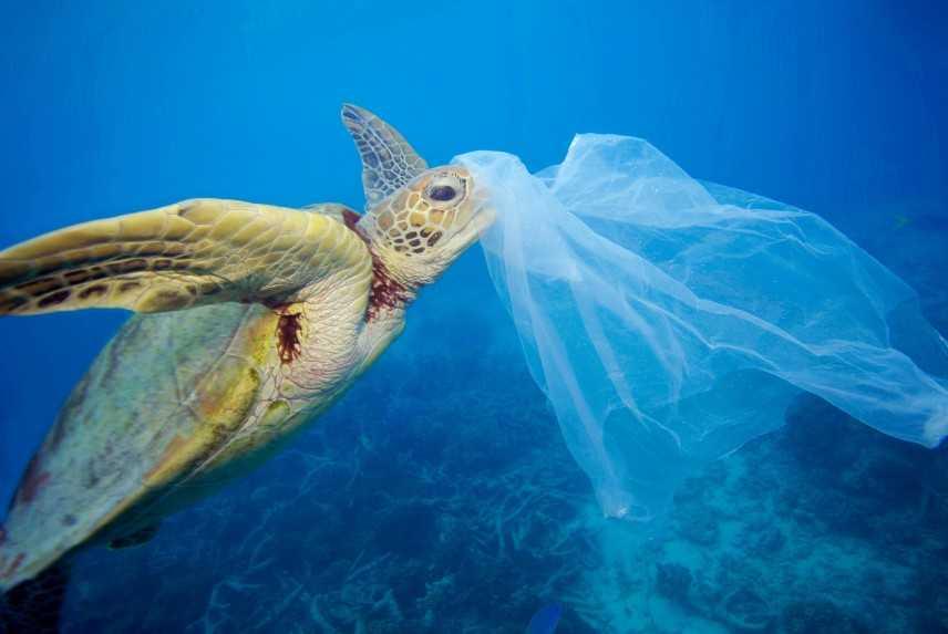 Ministro Costa:#Plasticfree, aumentano le adesioni